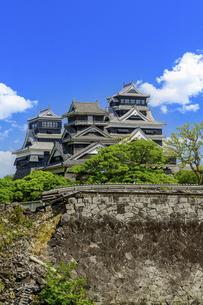 熊本城「復興再建完了の天守閣」二の丸広場より熊本城風景の写真素材 [FYI04858705]
