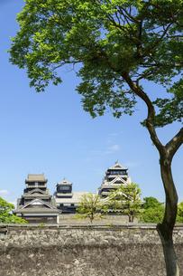 熊本城「復興再建完了の天守閣」二の丸広場より熊本城風景の写真素材 [FYI04858709]