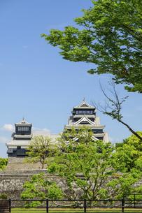 熊本城「復興再建完了の天守閣」二の丸広場より熊本城風景の写真素材 [FYI04858714]