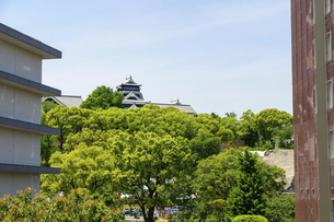 熊本城「復興再建完了の天守閣」上通・繁華街より熊本城・新緑撮影の写真素材 [FYI04858831]