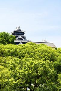 熊本城「復興再建完了の天守閣」上通・繁華街より熊本城・新緑撮影の写真素材 [FYI04858836]