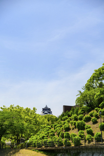 熊本城「復興再建完了の天守閣」路上より撮影の写真素材 [FYI04858875]