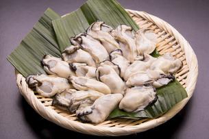 むき牡蛎の写真素材 [FYI04859090]