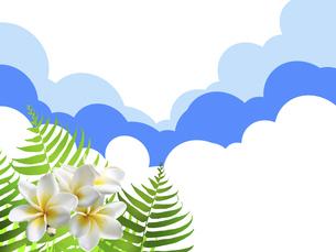 リゾート トロピカル 青空 ハワイ 南国 シダ植物のイラスト素材 [FYI04859236]