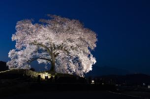 わに塚の桜のライトアップの写真素材 [FYI04859324]