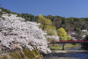 中橋と桜の写真素材 [FYI04859340]