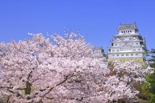 姫路城 天守閣と桜の写真素材 [FYI04859470]
