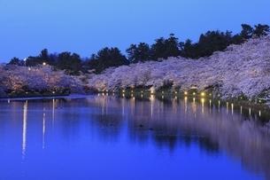 弘前公園 西濠の夜桜の写真素材 [FYI04859496]