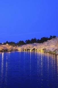 弘前公園 西濠の夜桜の写真素材 [FYI04859498]