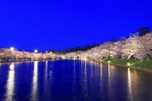 弘前公園 西濠の夜桜の写真素材 [FYI04859501]