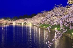 弘前公園 西濠の夜桜の写真素材 [FYI04859502]