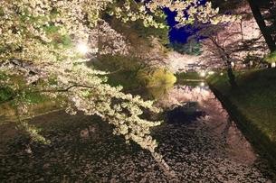 弘前公園 内濠の夜桜と花筏の写真素材 [FYI04859503]