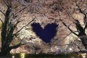 弘前公園 ハートの桜の写真素材 [FYI04859504]