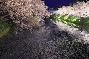 弘前公園 中濠の夜桜と花筏の写真素材 [FYI04859507]