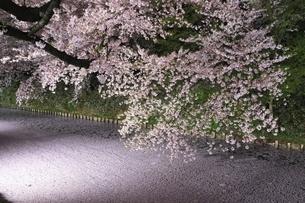 弘前公園 外濠の夜桜と花筏の写真素材 [FYI04859509]