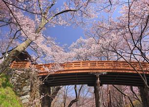 タカトオコヒガンザクラと桜雲橋とハート型の青空の写真素材 [FYI04859543]