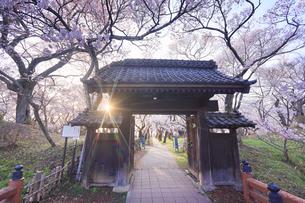問屋門とタカトオコヒガンザクラと夕日の写真素材 [FYI04859545]