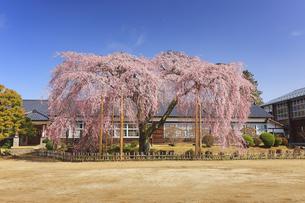 杵原学校の枝垂桜の写真素材 [FYI04859634]