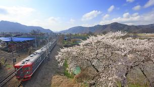 桜としなの鉄道の115系電車の写真素材 [FYI04859644]