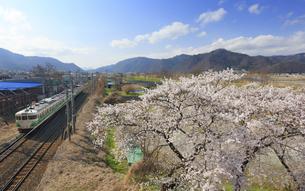 桜としなの鉄道の115系初代長野色電車の写真素材 [FYI04859645]