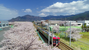 桜並木とテクノさかき工業団地としなの鉄道の115系電車の写真素材 [FYI04859650]