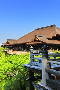 世界文化遺産 京都・清水寺の奥の院より本堂舞台の写真素材 [FYI04859751]