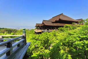 世界文化遺産 京都・清水寺の奥の院より本堂舞台の写真素材 [FYI04859753]