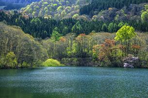 新緑の蔵王鴫の谷地沼の写真素材 [FYI04859773]