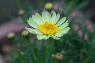 春の花の写真素材 [FYI04859780]