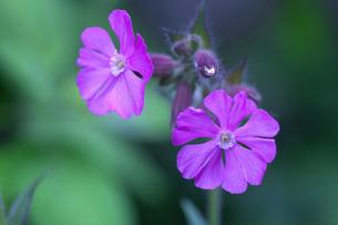 春の花の写真素材 [FYI04859784]