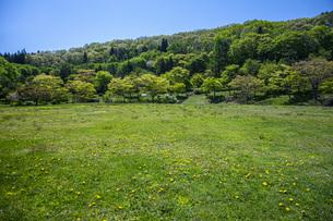 新緑の県民の森の写真素材 [FYI04859790]