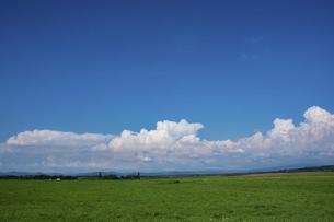 緑の草原と青空の写真素材 [FYI04859827]