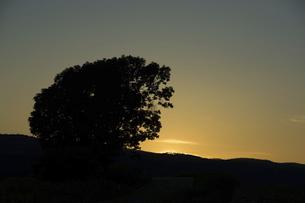 美しい夕暮れの空と大きな木のシルエットの写真素材 [FYI04859840]