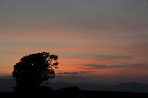 夕暮れの空とカシワの木の写真素材 [FYI04859841]