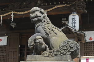 渋沢栄一翁が氏子の七社神社 子守犬雄の写真素材 [FYI04859853]