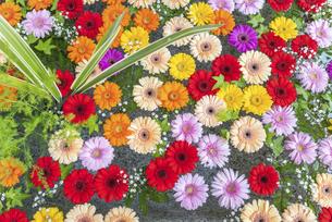 手水舎に浮かぶ花の写真素材 [FYI04859901]