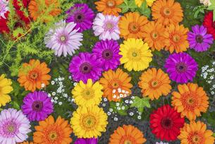 手水舎に浮かぶ花の写真素材 [FYI04859902]