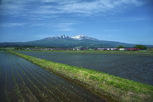 残雪の鳥海山と田園の写真素材 [FYI04859952]