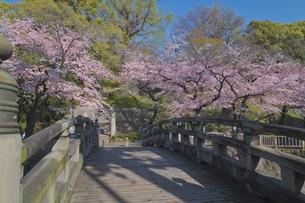 日本の都市公園100選 音無親水公園の桜と舟串橋の写真素材 [FYI04859992]