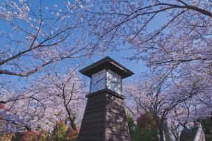 日本最初の公園 八代将軍徳川吉宗が享保の改革のひとつで江戸っ子の行楽地として飛鳥山を桜の名所  飛鳥山公園 青空に時計台と桜の写真素材 [FYI04859993]