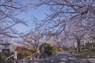日本最初の公園 八代将軍徳川吉宗が享保の改革のひとつで江戸っ子の行楽地として飛鳥山を桜の名所  飛鳥山公園 青空に時計台と桜の写真素材 [FYI04859995]