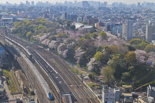 日本最初の公園 八代将軍徳川吉宗が享保の改革のひとつで江戸っ子の行楽地として飛鳥山を桜の名所 飛鳥山公園の桜とJR東日本 E7系かがやき北陸新幹線の写真素材 [FYI04860005]