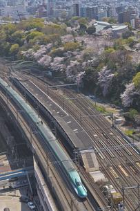 日本最初の公園 八代将軍徳川吉宗が享保の改革のひとつで江戸っ子の行楽地として飛鳥山を桜の名所 飛鳥山公園の桜とJR東日本 E5系はやぶさ東北新幹線の写真素材 [FYI04860017]