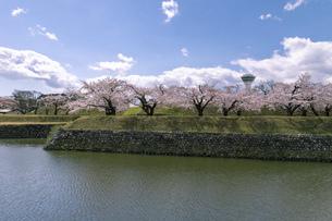 北海道 函館市五稜郭公園の桜の写真素材 [FYI04860122]
