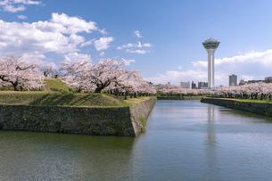 北海道 函館市五稜郭公園の桜の写真素材 [FYI04860131]