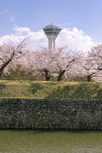 北海道 函館市五稜郭公園の桜の写真素材 [FYI04860135]
