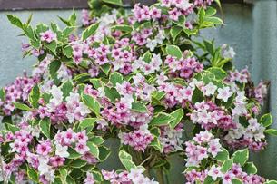 春の花の写真素材 [FYI04860251]