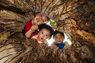 木の穴をのぞく子供の写真素材 [FYI04860394]
