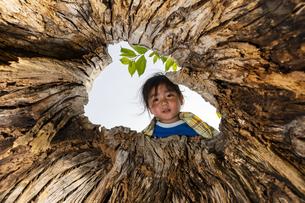 木の穴をのぞく子供の写真素材 [FYI04860397]
