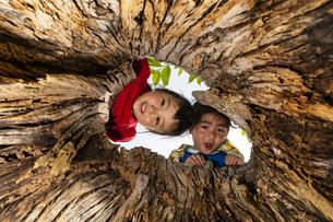 木の穴をのぞく子供の写真素材 [FYI04860400]